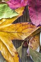 Autumn's Closeup Fine Art Print