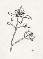 Floral Ink Study II Framed Print