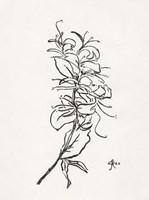 Floral Ink Study VI Framed Print