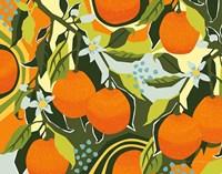 Sweet Clementine I Fine Art Print
