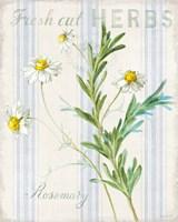 Floursack Herbs I Framed Print
