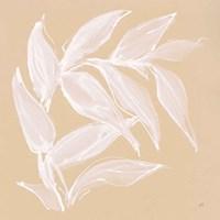 Leaf Study VI Framed Print