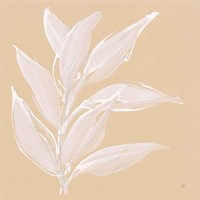 Leaf Study II Framed Print