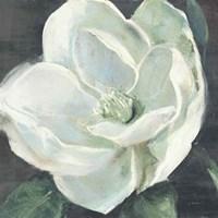 Magnolia III Sage Framed Print