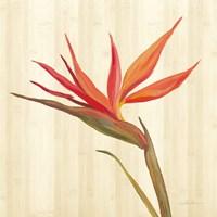 Tropical Garden IV Framed Print