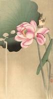 Songbird and Lotus, 1900-1936 Fine Art Print