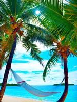 Coconut Sun Fine Art Print