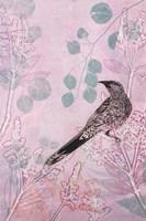 Dusk Wattlebird in Pink Fine Art Print