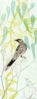 Eager To Fly Wattlebird Fine Art Print