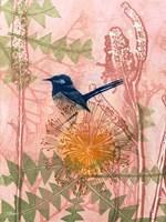Little Blue Wren Fine Art Print