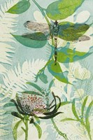 The Elusive Dragonfly and Waratah Fine Art Print