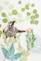 Wattlebird and Pincushion Protea Fine Art Print