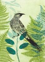 Wattlebird Hiding in the Fernery Fine Art Print