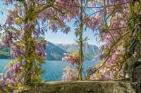 Wisteria and Mountains - Lago di Como Fine Art Print
