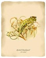 Chameleopard Fine Art Print
