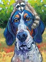 Coonhound Fine Art Print