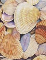 Sea Shells Fine Art Print