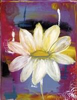 White Daisy Fine Art Print