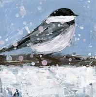 Chickadee Bird 1 Fine Art Print