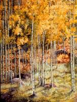 Fall Aspen Fine Art Print