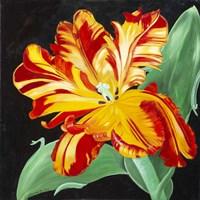 Geel-Rood Fine Art Print
