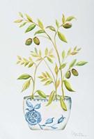 Extend an Olive Branch Fine Art Print