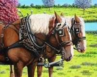 Clydesdales in the Meadow Fine Art Print