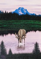 Moose near Mt. Moran Fine Art Print