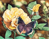 Mourning Cloak Fine Art Print