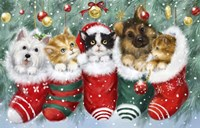 Cats in Stockings Fine Art Print