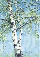 Aspen Tree 1 Fine Art Print