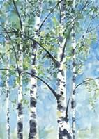 Aspen Tree 2 Fine Art Print