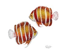 Ocean- Peppermint Angelfish Fine Art Print
