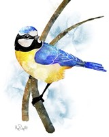 Songbirds- Blue Titmouse Fine Art Print
