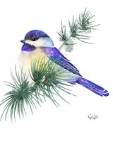 Songbirds- Chicadee and Evergreen Fine Art Print