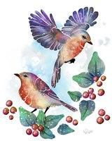Songbirds- Euro Robins Fine Art Print