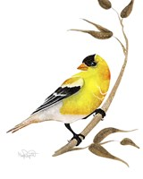Songbirds- Goldfinch Fine Art Print