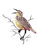 Songbirds- Meadowlark Fine Art Print