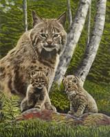 Bobcat with Kits Fine Art Print