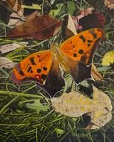 Orange Moth Question Mark Butterfly Fine Art Print