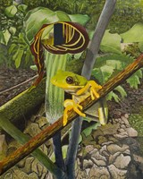 Frog and Jack-in-the Pulpit Fine Art Print