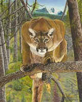Mountain Lion Fine Art Print