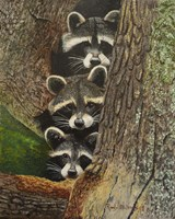Three Racoons Fine Art Print