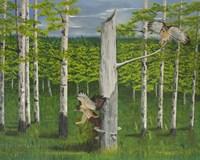 Two Hawks Fine Art Print