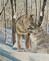 Wolves Devotion Fine Art Print