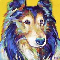 Sheltie on Yellow Fine Art Print