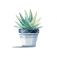 Aloe Plant Fine Art Print