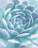 Aqua Succulent Fine Art Print