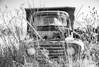 Truck in Wildflower Field Fine Art Print