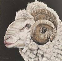 Portrait of a Ram Fine Art Print
